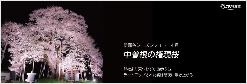 伊那谷シーズンフォト|4月-No.2