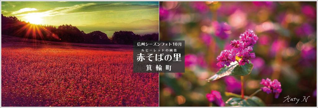 信州シーズンフォト2021 10月 赤そばの里